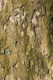 Texture. Tree bark in the village Stock Photos