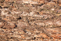 Texture. The texture of tree bark in the village Royalty Free Stock Photo