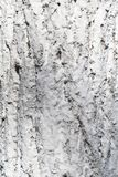 Texture of tree bark in whitewash stock images