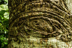 Texture on tree Royalty Free Stock Images