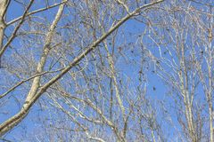 Texture of tree branches against blue sky stock photo