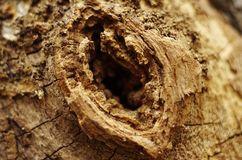 Texture tree. Chinese Texture tree Trunk Cave Stock Photos
