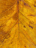Texture tree leaf fall Stock Photo