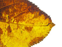 Texture tree leaf fall Royalty Free Stock Image