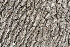 Texture of tree Stock Photo