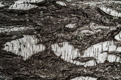 Texture tree stock images