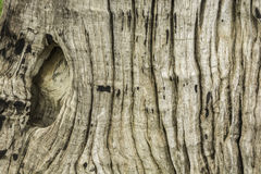 Texture of tree photography. Brown texture of tree photography Stock Photo