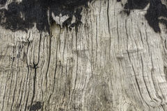 Texture of tree photography. Brown texture of tree photography Stock Images