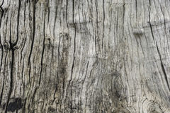 Texture of tree photography. Brown texture of tree photography Royalty Free Stock Images