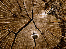 Texture Tree Rings Royalty Free Stock Photos