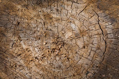 The texture of the tree in section Royalty Free Stock Image
