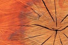 Texture of tree stump Stock Photos