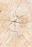 Texture of tree stump Royalty Free Stock Photo