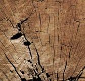 Texture Of Tree Stump Stock Images