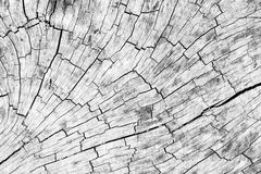 Texture of tree stump Royalty Free Stock Images
