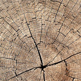 Texture of tree stump Royalty Free Stock Photos