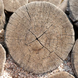 Texture of tree stump Royalty Free Stock Image