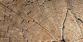 Texture of tree stump. Abstract texture of tree stump, crack wood ancient Royalty Free Stock Photos