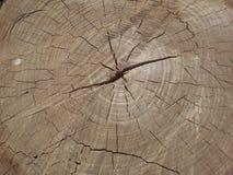 Texture of tree stump Stock Photography