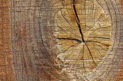 Texture of tree stump. Royalty Free Stock Photo