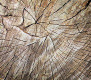 Texture of tree stump Royalty Free Stock Photo