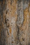 The texture of the tree trunk. Background is yellow and gray. royalty free stock image