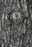 Texture of tree trunk Stock Photo