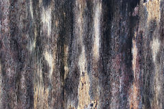 Texture. Tree trunk in a dark gray color. Stock Images
