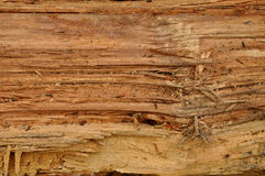 Texture tree trunk. A trunk is the main part of the stem of a tree, generally vertical and without branching, situated between the roots and the crown, supported stock images