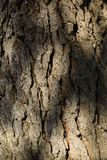 Texture of a tree trunk Royalty Free Stock Photography