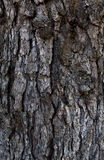 Texture of a tree trunk Stock Photos