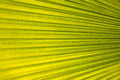 Texture of tropical leaf Stock Images