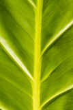 Texture tropicale de lame Photos libres de droits