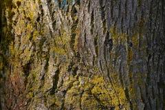 Tree Trunk Closeup Royalty Free Stock Image