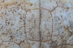 Texture of Turtle carapace Royalty Free Stock Photo
