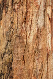 Texture of umber brown tree, background Stock Photos