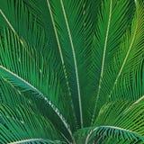 Texture, unicité, couleur, feuilles, vert, nature, arbres, végétation, paume, tropiques Image stock