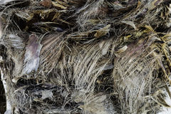 Texture vegetal fiber on trunk of palm Royalty Free Stock Images
