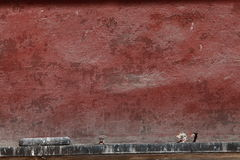 Texture of Venice Royalty Free Stock Images