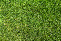 Texture verte Photos libres de droits
