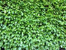 Texture verte Photographie stock