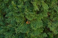 Texture verte Image stock