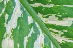Texture verte abstraite de feuille pour le fond Image stock