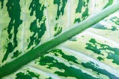 Texture verte abstraite de feuille pour le fond Photos stock