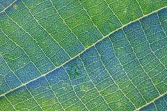 Texture verte abstraite de feuille pour le fond Photographie stock libre de droits