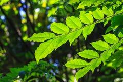 Texture verte abstraite de feuille pour le fond Photo libre de droits