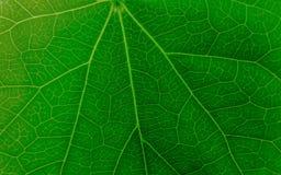 Texture verte abstraite de feuille pour le fond Photos libres de droits