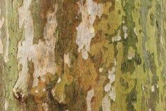 Texture verte d'arbre Photographie stock