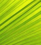 Texture verte de congé Photographie stock