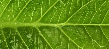 Texture verte de feuille Photo libre de droits